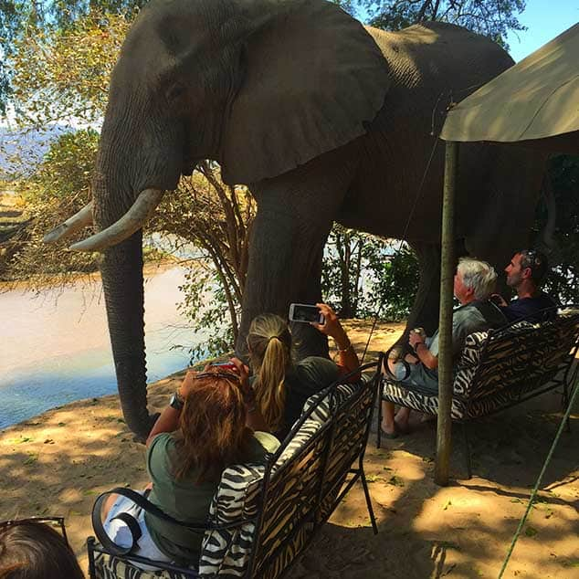 Stretch Ferreira Safaris Elephant Visitors Zimbabwe Mana Pools