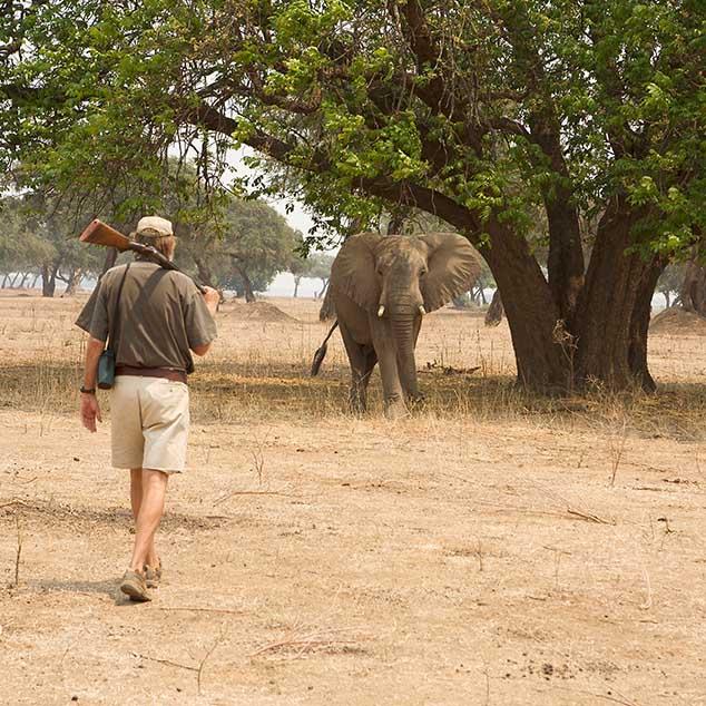 Stretch Ferreira Safaris Elephant Zimbabwe Mana Pools