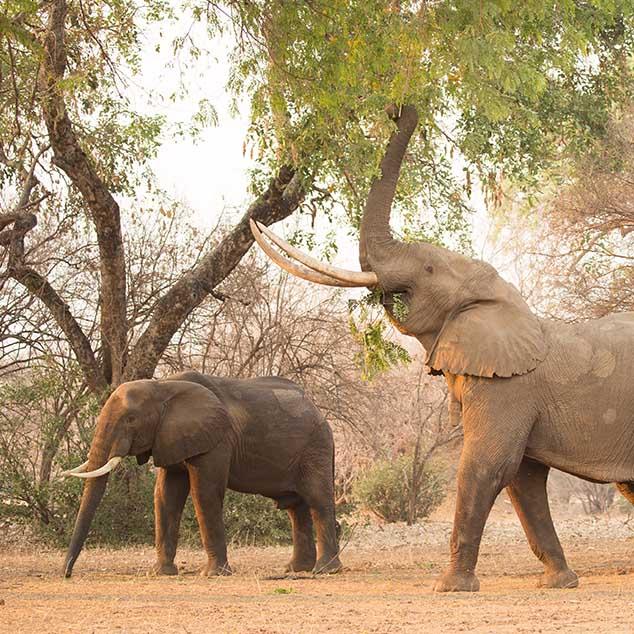 Stretch Ferreira Safaris Tented Safaris Zimbabwe Mana Pools 2